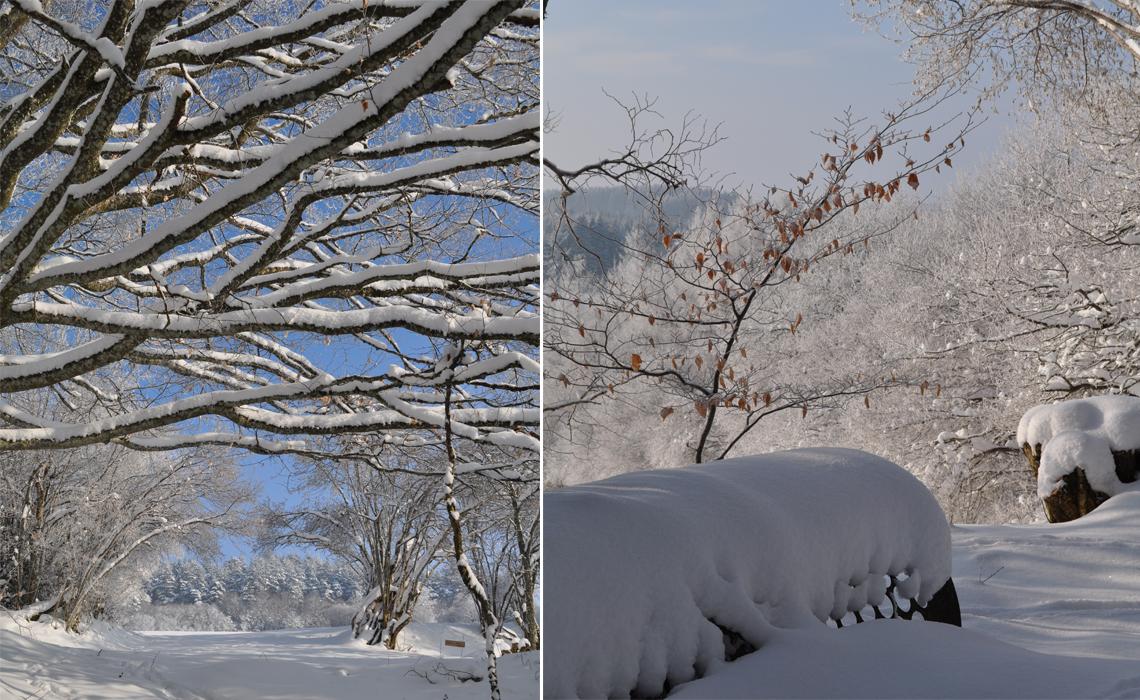 sous la neige 02
